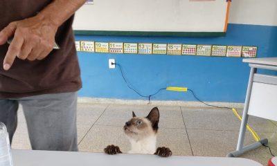 Gata acompanha o dono na hora de votar em Porto Velho