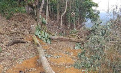 Chuva com vento forte derruba árvore e mata dois trabalhadores