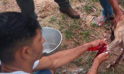 Homem atira em cachorro que queria cruzar com cadela no interior de Rondônia